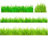 Zelená tráva — Stock fotografie