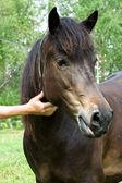 Funny and beautiful Horse head — Stock Photo
