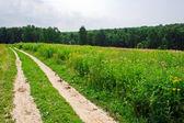 Road across a field — Stock Photo