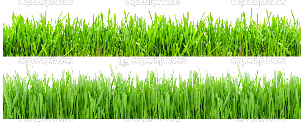 Two types of green grass on white background — Stock Photo #1007409