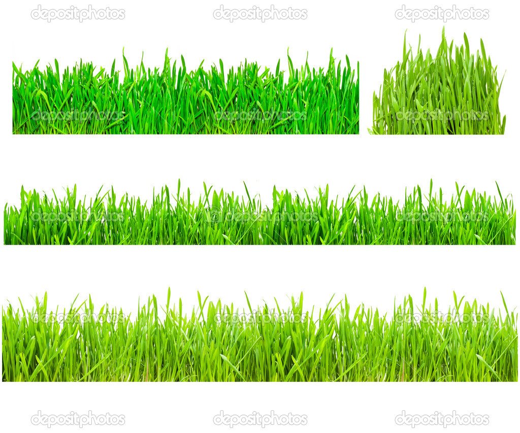 Two types of green grass on a white isolated background  Foto de Stock   #1008406