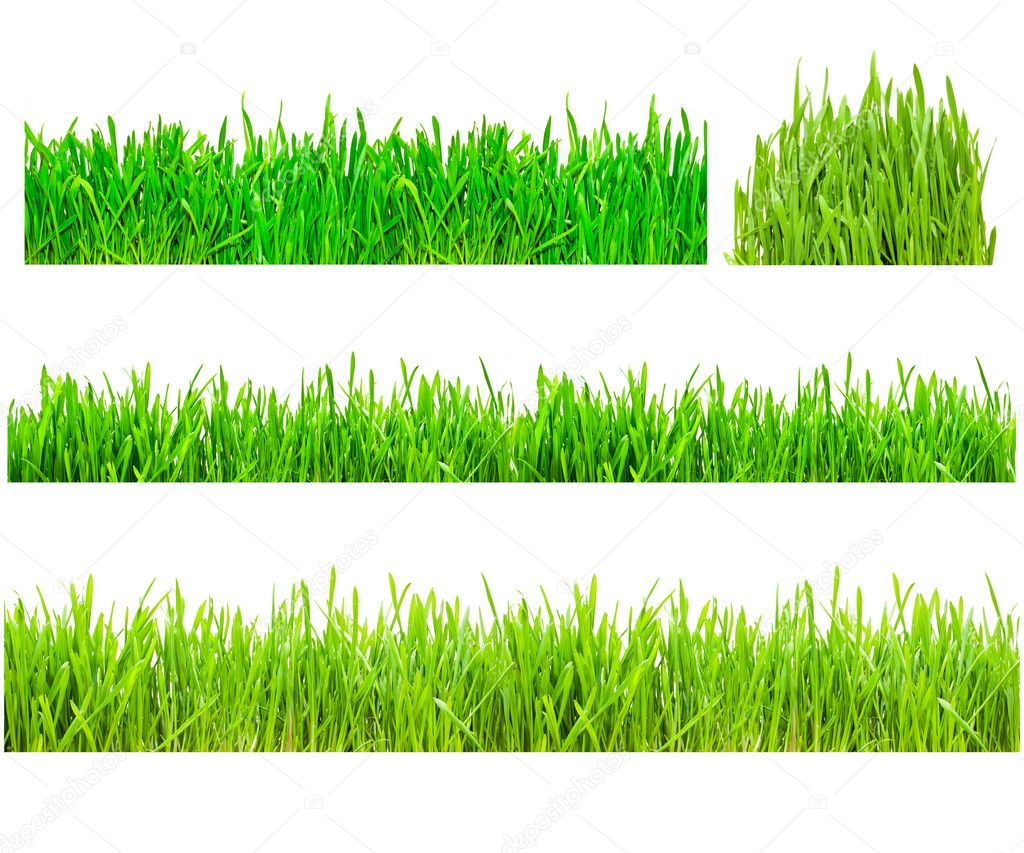 Two types of green grass on a white isolated background — Foto Stock #1008406