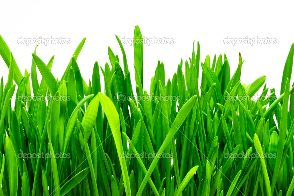 Fresh green grass on white isolated background — Stock Photo #1008751