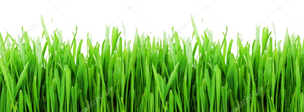 Fresh green grass on white background — Stock Photo #1009352