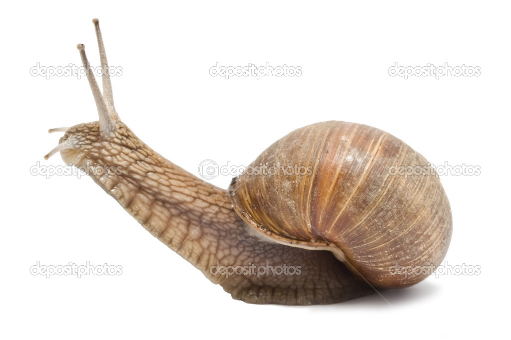 Funny snail on a white background — Stock Photo #1009682