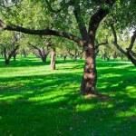 Apple garden — Stock Photo #1010438