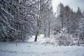 Paisaje de invierno — Foto de Stock