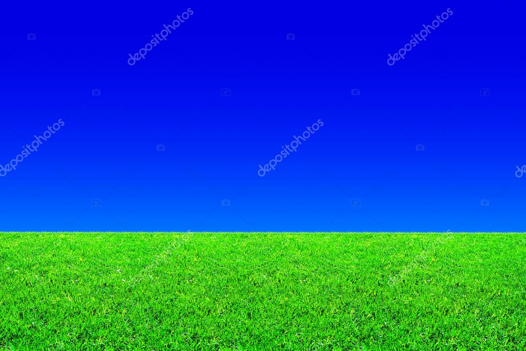 Fresh green grass and blue sky background — Foto de Stock   #1010485