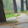 Footpath in park — Stock Photo #1046963