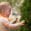 Stock Photo: Litle boy is playing with fir tree