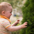 Litle boy is playing with fir tree — Stock Photo