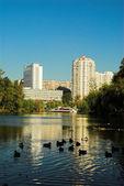 City pond — Stock Photo