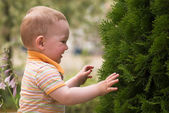 Litle boy is playing with fir tree — Stockfoto