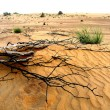 Branch in desert - Stock Photo