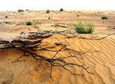 Branch in desert — Stock Photo