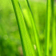 Stock Photo: Grass