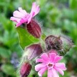 Flower — Stock Photo #1023095