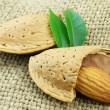 Almond — Stock Photo #1011771