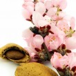 Stock Photo: Almond with pink flowers