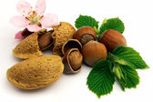 Almond with flower and hazelnuts with le — Stock Photo
