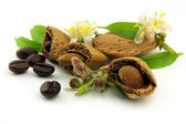 Almond with flowers and coffee beans — Stock Photo
