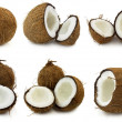 coconut — Stock Photo #1528239