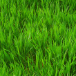 Texture of green grass — Stock Photo #1102626