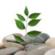 Plant on a pile of stones — Stock Photo