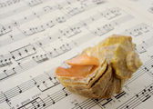 Sea shell and music — Stock Photo
