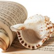 Stock Photo: Sea shell and music book