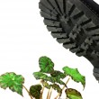 Brute military boots and plant — Stock Photo