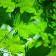 Abstract foliage — Stockfoto