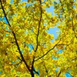 Royalty-Free Stock Photo: Autumn branch of oak on a background of