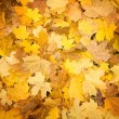 Autumn carpet — Stock Photo