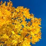 Autumn foliage and sky — Stock Photo