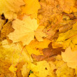 Autumn foliage background — Stock Photo