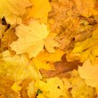 Stock Photo: Autumn foliage background