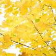 Autumn foliage — Stock Photo #1030951