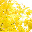 Autumn foliage — Stock Photo #1031670