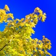 Stock Photo: Autumn tree on background of sky
