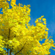 Stock Photo: Autumn yellow foliage
