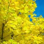 Background of autumn foliage — Stock Photo