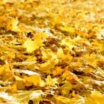 Background of fallen autumn foliage — Stock Photo