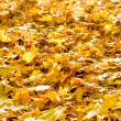 Background of fallen foliage — Stock Photo