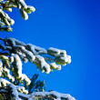 Branches of pine — Stock Photo #1035828