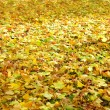 Bright fallen leaves — Stock Photo