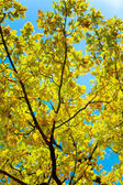 Autumn branch of oak on a background of — Stock Photo