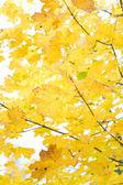 Folhagem de outono — Foto Stock