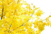 осенняя листва — Стоковое фото