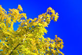 Autumn tree on a background of the sky — Stock Photo